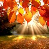есен-1